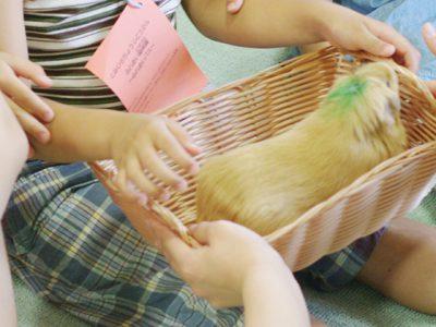ふれあい動物園で、子供と学んだら、これをやってみよう!