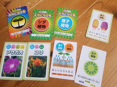 UNOゲームで植物を学ぼう!裸子植物、単子葉類、双子葉類も楽々クリア