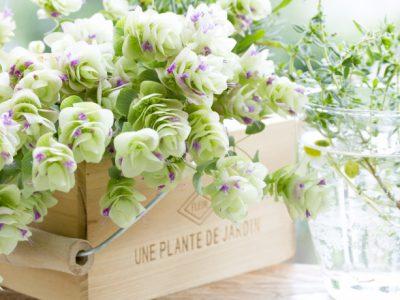 お部屋をパッと変える観葉植物、インドアグリーンの置き方選び方
